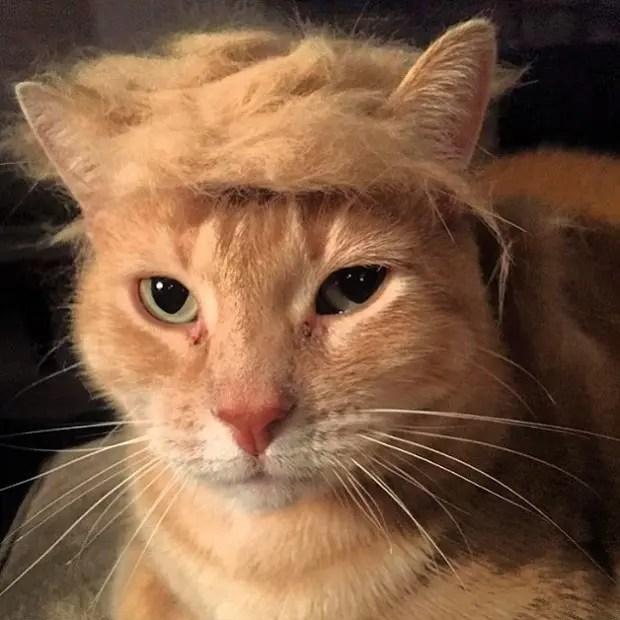 Trumpcat5