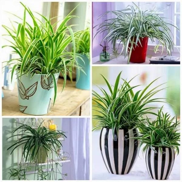 plantas-que-purifican-7
