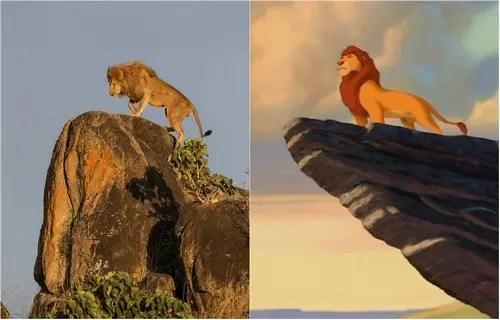 rey-leon-vida-real-1