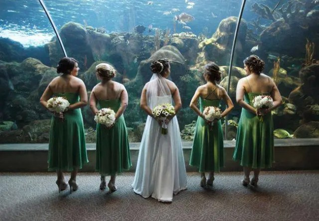 boda-acuario12