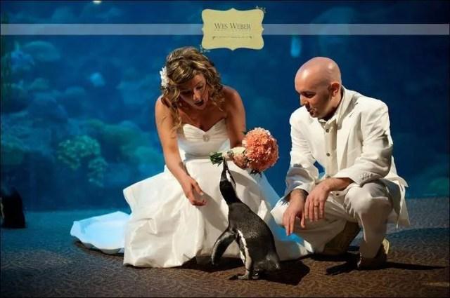 boda-acuario19