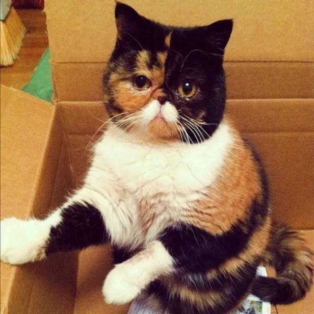 gatos con bigote 1