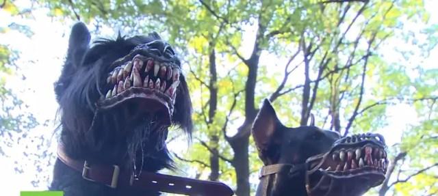 perro-bosal5
