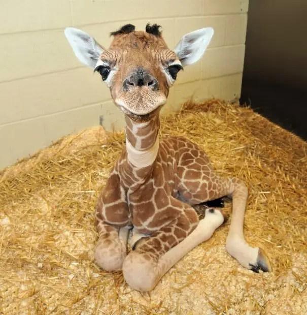 adorables animales bebe 12