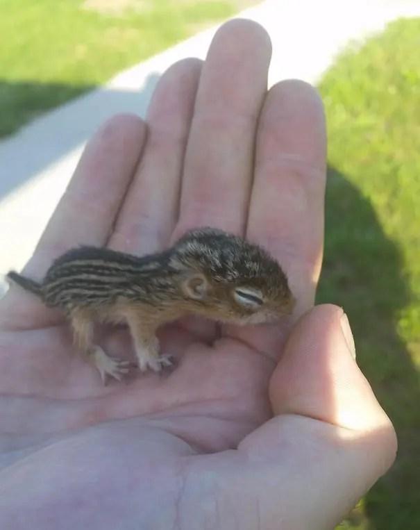 adorables animales bebe 4