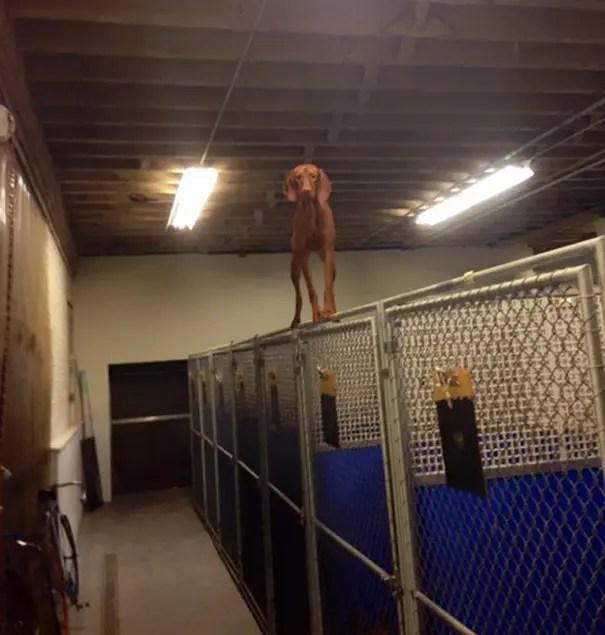 fails de perros 6