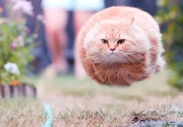 momento preciso gatos 1
