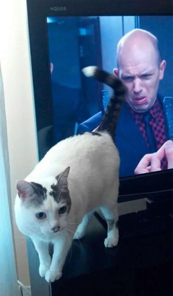 momento preciso gatos 11