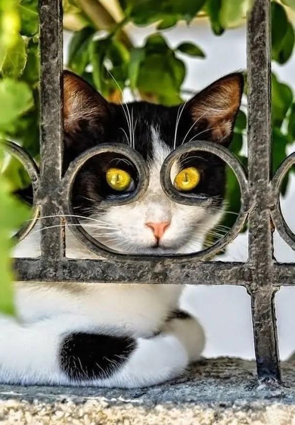 momento preciso gatos 9