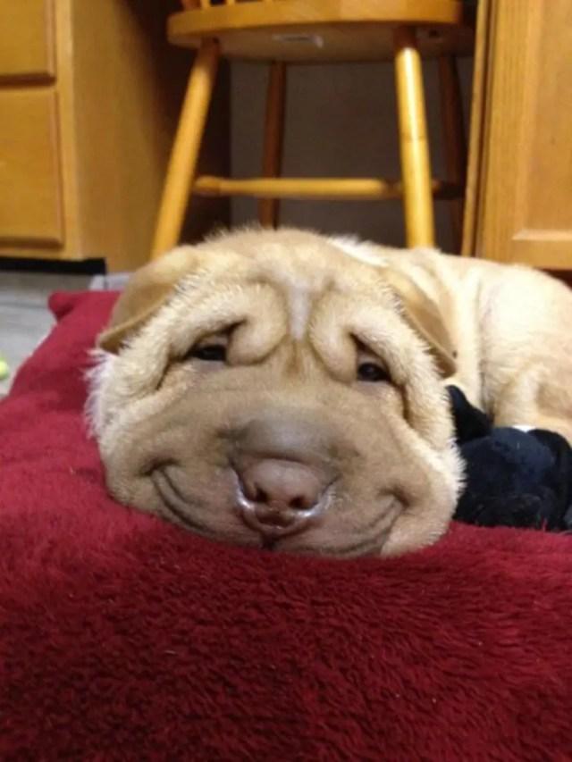 sonrisas de perros 1