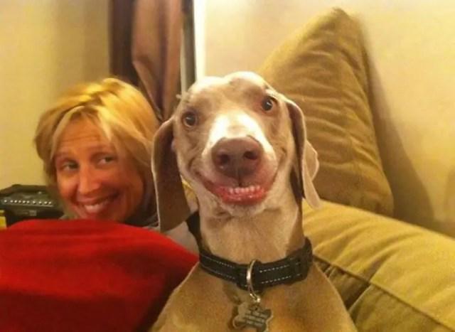 sonrisas de perros 4