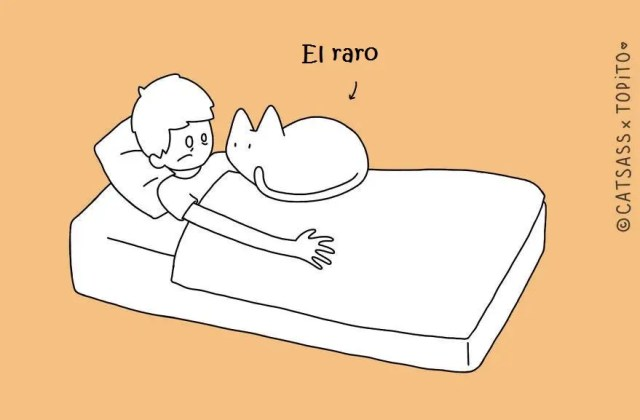 10-posiciones-para-dormir-con-tu-gato1