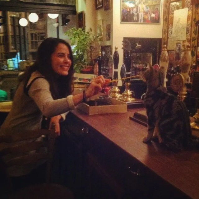 bar de gatos 7