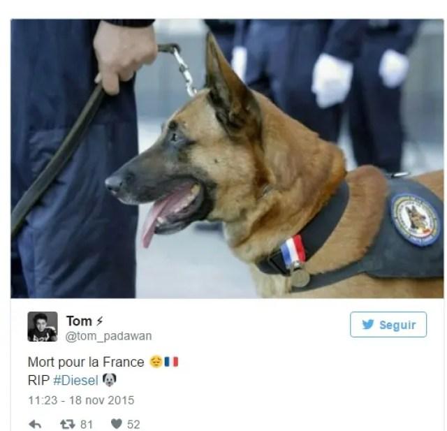 muerte-de-perro-policia-paris-redada2