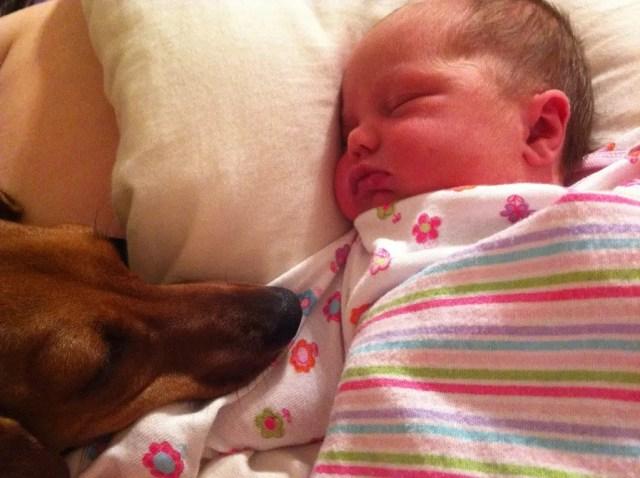 perritos-con-bebes-11