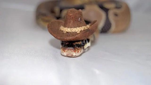 sombreros serpientes 11
