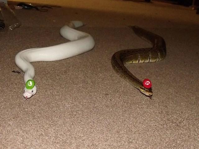 sombreros serpientes 9