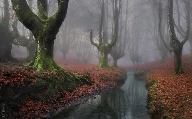 bellos bosques 8