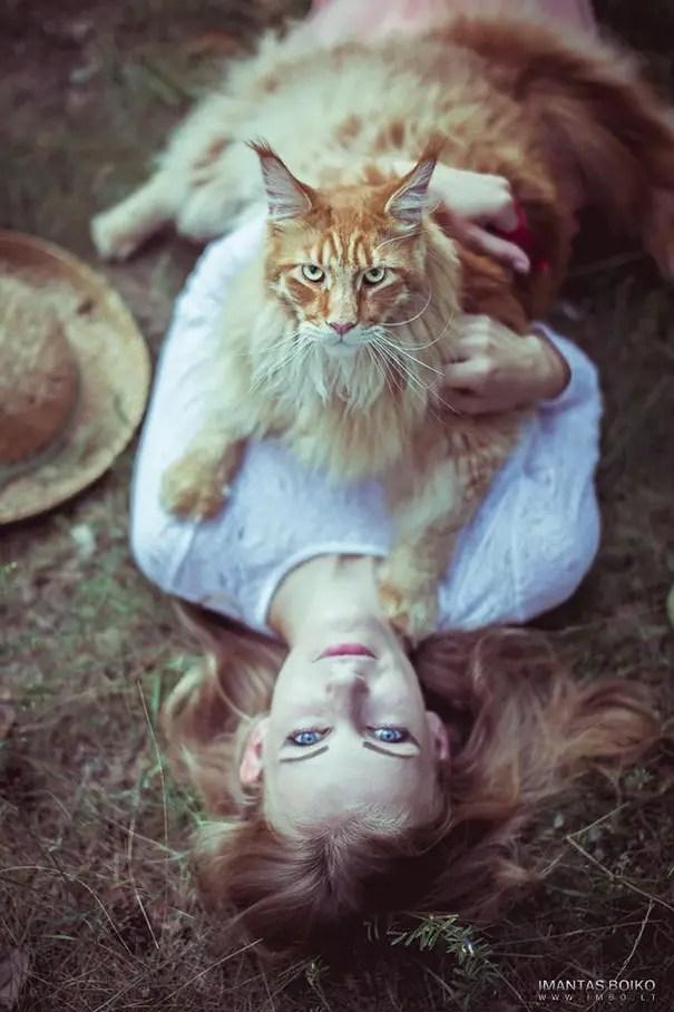 gato coon 4