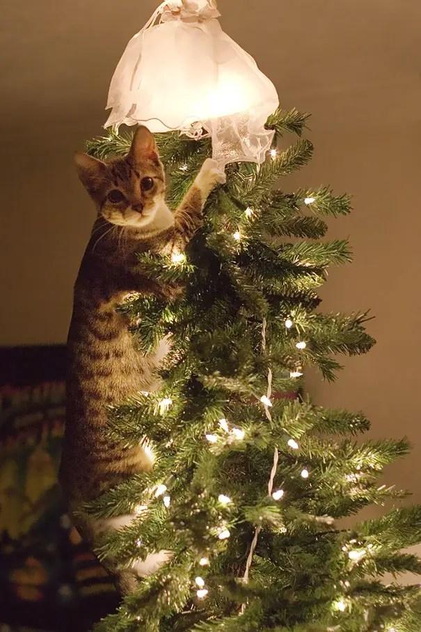 gatos-decorando-arbol-de-navidad11