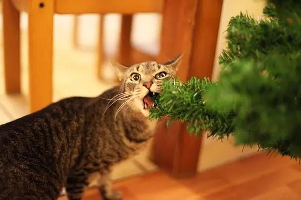 gatos-decorando-arbol-de-navidad17