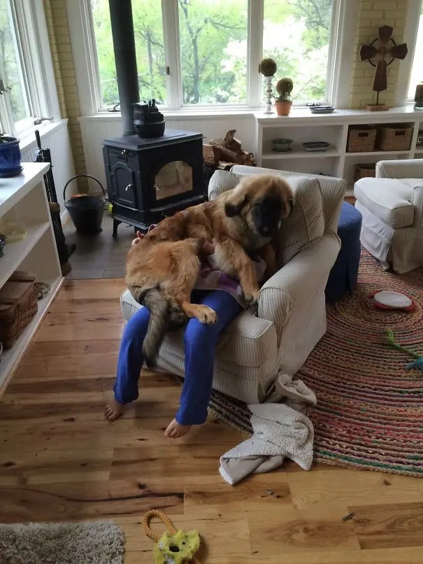 perros espacio personal 19