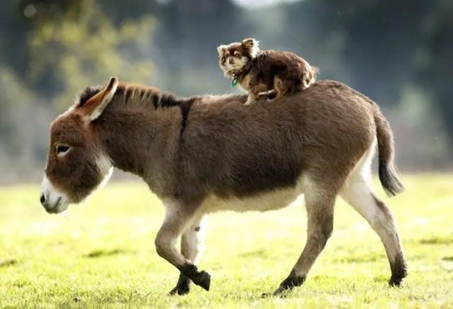 13-razones-para-tener-un-burro-bebe4