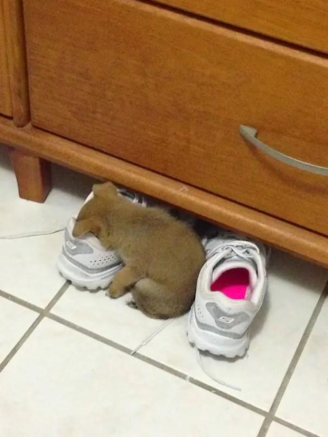 animales dormidos lol 15