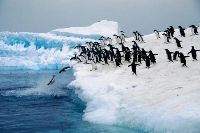 animales jugando en nieve 15