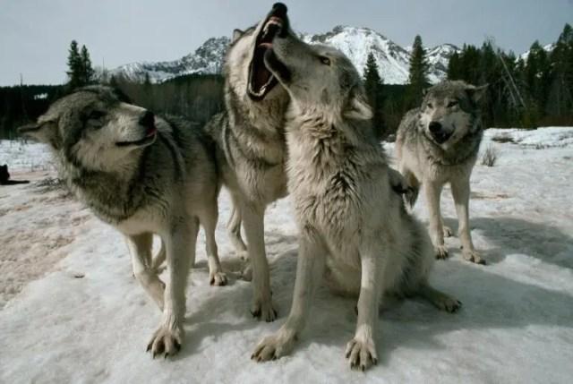 animales jugando en nieve 2