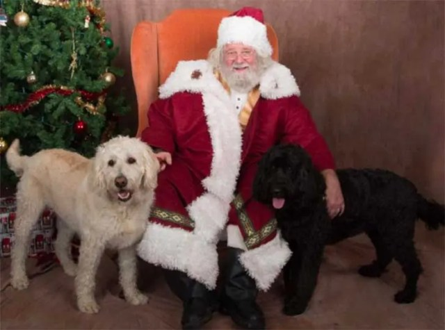 familia-perros-navidad2