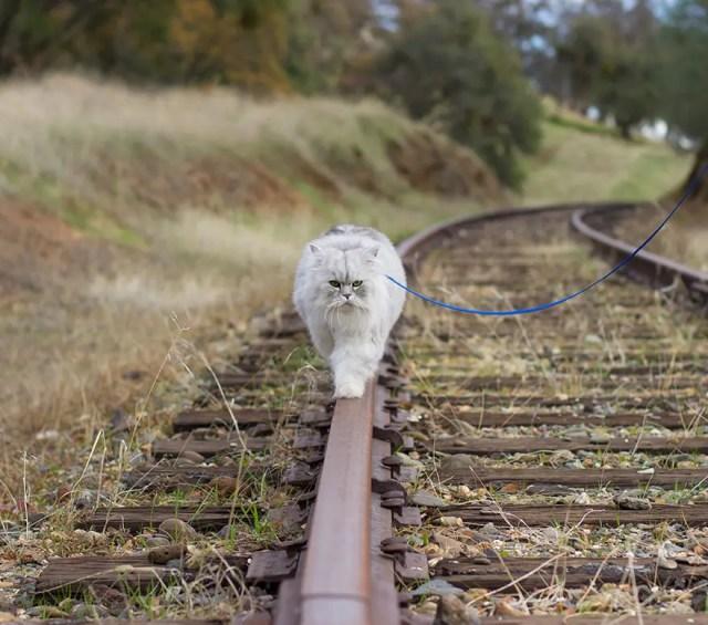 gandalf el gato 6