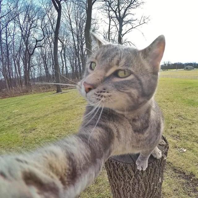 gato selfie 2