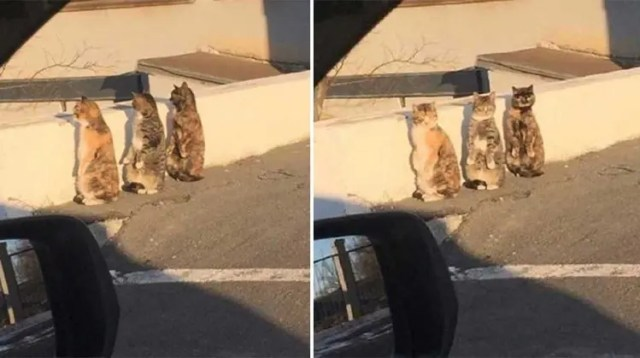 gatos-sorprendidos-sospechosa-actitud1