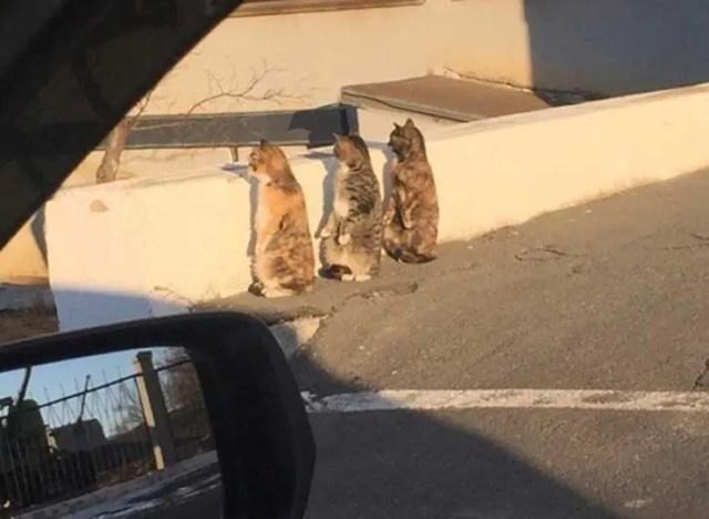gatos-sorprendidos-sospechosa-actitud2