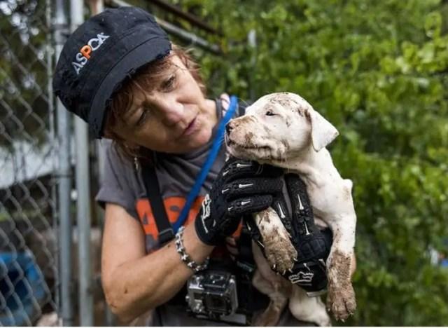 23 perros peleas rescatados 4