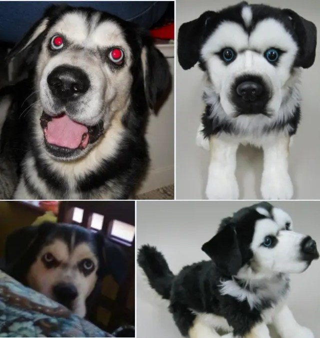 perritos-clonados-en-peluche-21