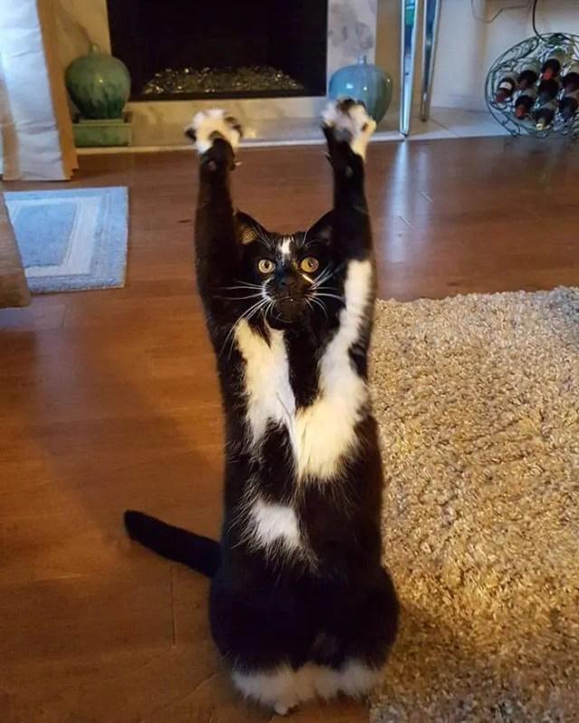 gato_brazos_en_alto8
