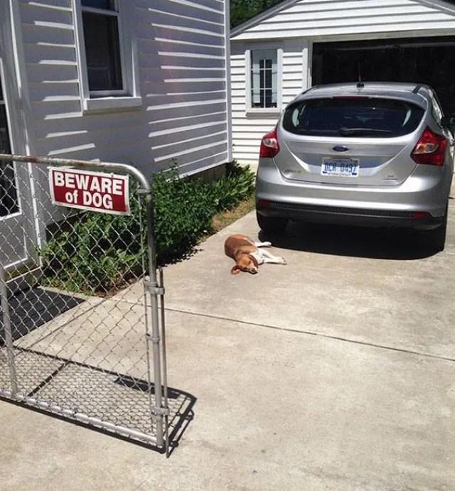 adorables-perros-peligrosos-15
