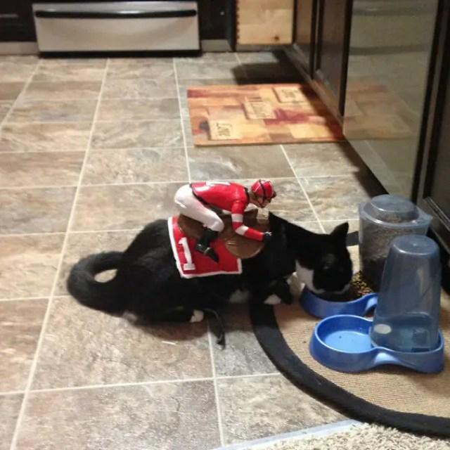 disfraces_gatos-6