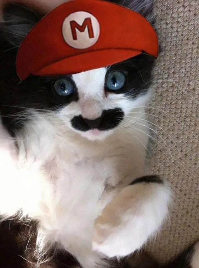 disfraces_gatos-7