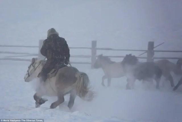caballos-yakutos-7