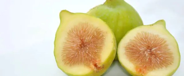 flor-de-higos-polinizacion-1