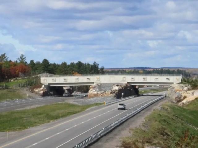 puente-peatonal-para-animales-10