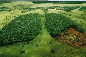 how to prevent deforestation