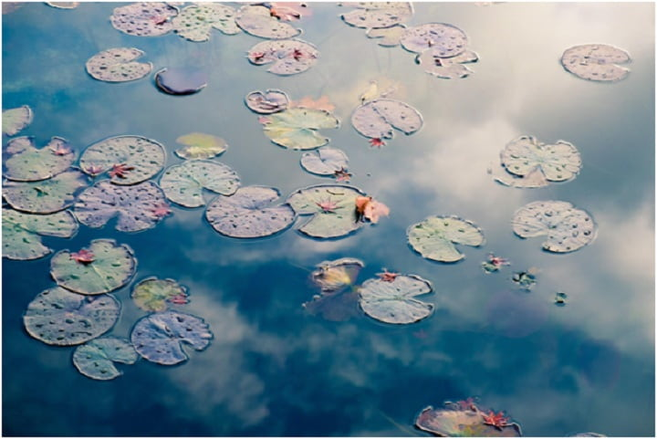 Must-have equipment for your backyard pond
