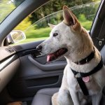 Travel With Your Emotional Animal Support