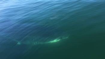Great White Shark Circles Father And Son On Small Boat