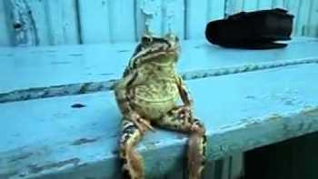 Frog Sitting On Bench Like A Person
