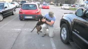 Excited Dog Greets Returning Soldier